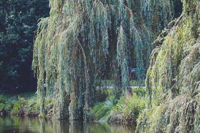 The Willows, Part 1