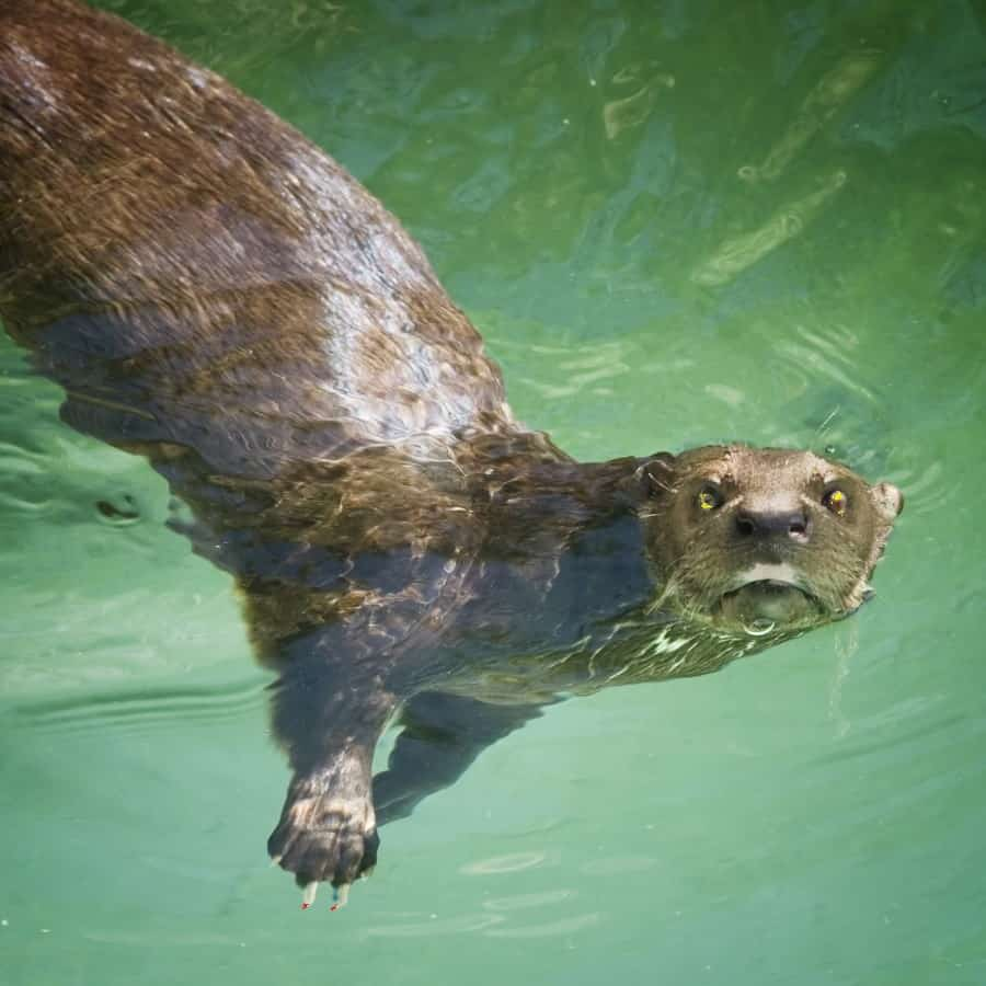 Scary chat story otter in The Willows