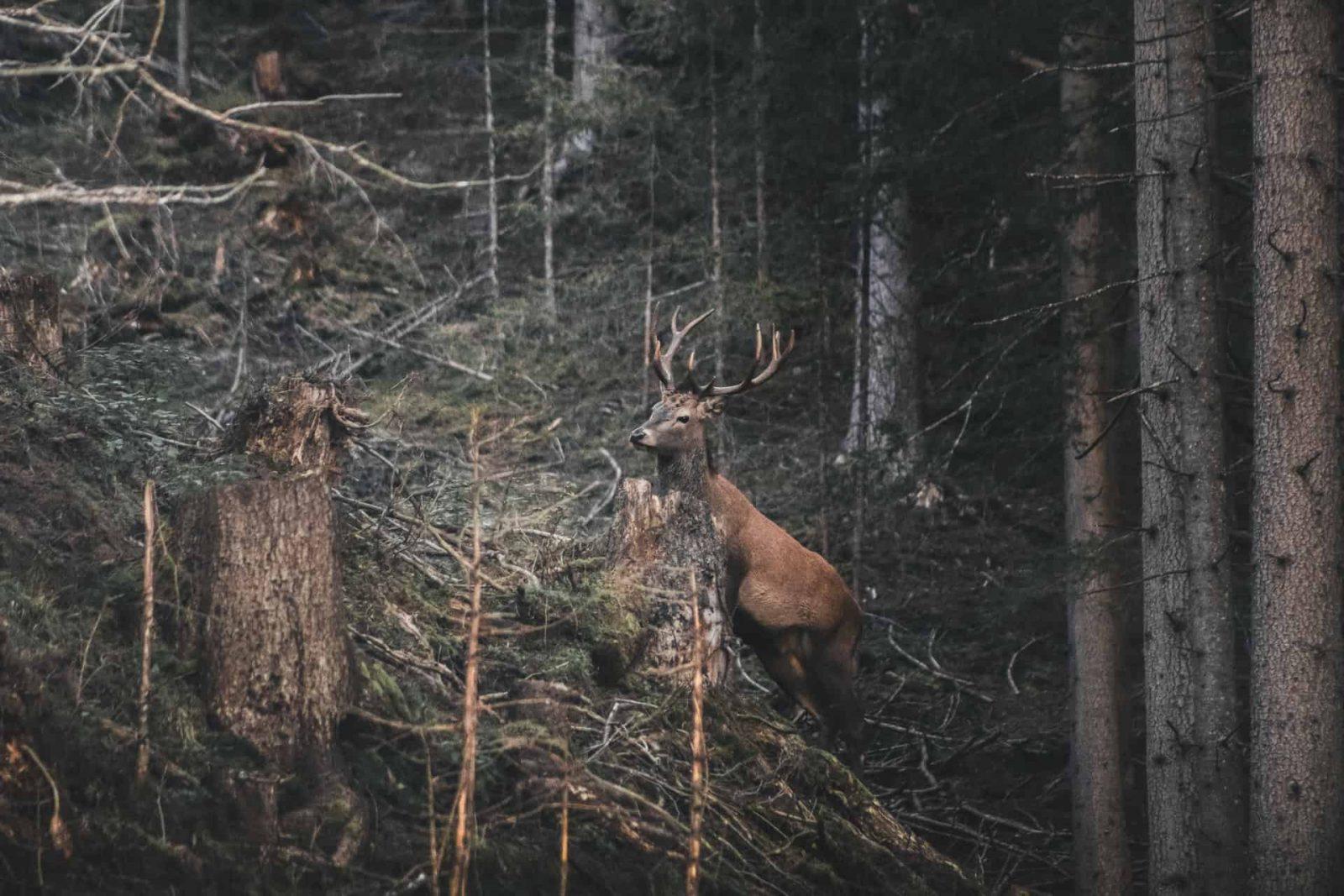 Nature spirit's revenge, The Music on the Hill, Part 2